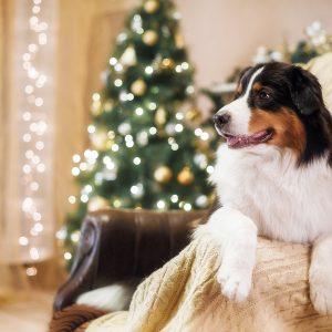 Dárky pro zvířecí mazlíčky: 3 + 1 vánoční tip